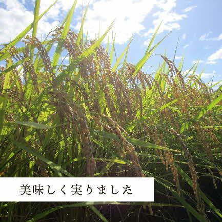 【令和2年産】浜田市金城町産こしひかり(5kg×6回コース)