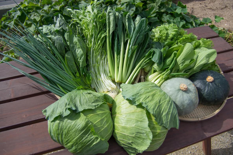自然豊かな浜田市弥栄町で作られた「旬の野菜おまかせセット」(6回コース)