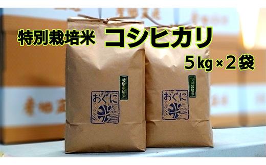 【令和2年産】浜田市金城町産の美味しいコシヒカリ100%【おぐに米】10Kg