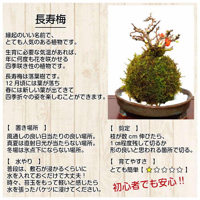 天然苔専門店 弥栄苔  選べる縁起物苔玉(2個セット)