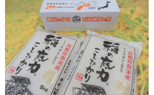 【令和3年産新米発送】浜田産「稲の底力こしひかり」10kg